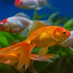 shakespeare quiz fish